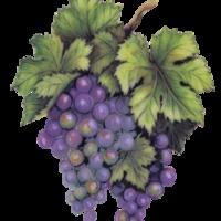 Hol született a bor?