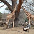 Az állatkertben nincs jövő