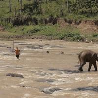 4. Pinnawala - Elefánt árvaház