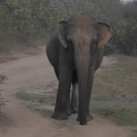 12. Udawalawe Nemzeti Park - A Szafari