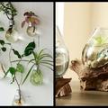 Milyen szobanövényt válasszak?
