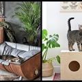 Macskaszag a lakásban? Így űzd el!