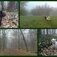 ... és itt van az ősz, most már tényleg