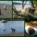 Dunapart, nyár...