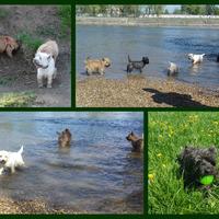 Ginger idei első úszása
