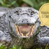 Egy aligátor fosztotta ki a floridai ház borkészletét