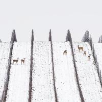 Pazar téli fotók a téli szőlőből