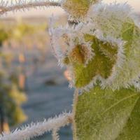 Így nyírja ki borvidékeinket a felmelegedés