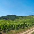 Miért zengenek a borszakértők dicshimnuszokat Tokajról?