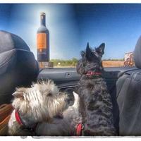 A kutyád lehet a legjobb ivópajtid