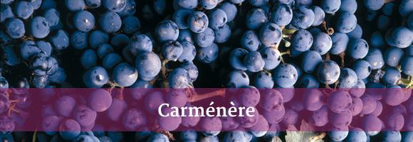 carmenere.jpg
