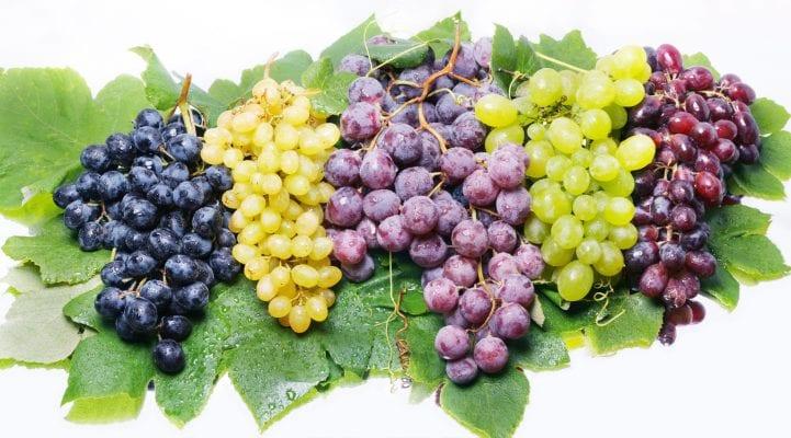 grape_variety.jpg