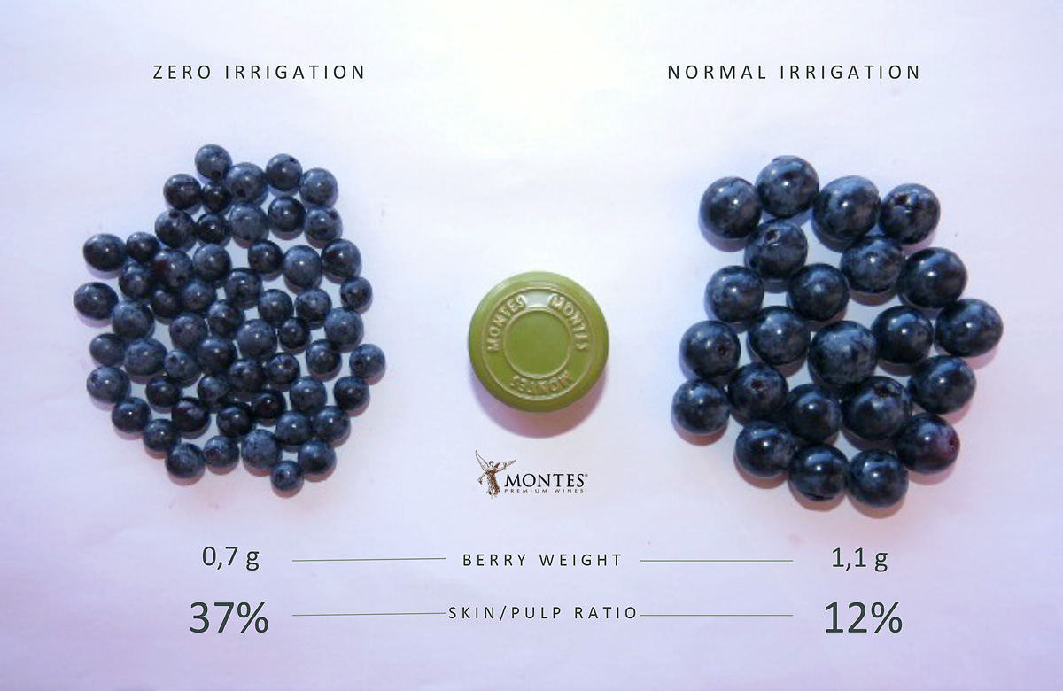 montes-dry-farming-berry-comparison.jpg
