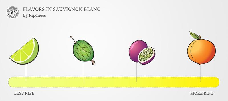 sauvignon-blanc-taste-profile-by-ripeness.jpg