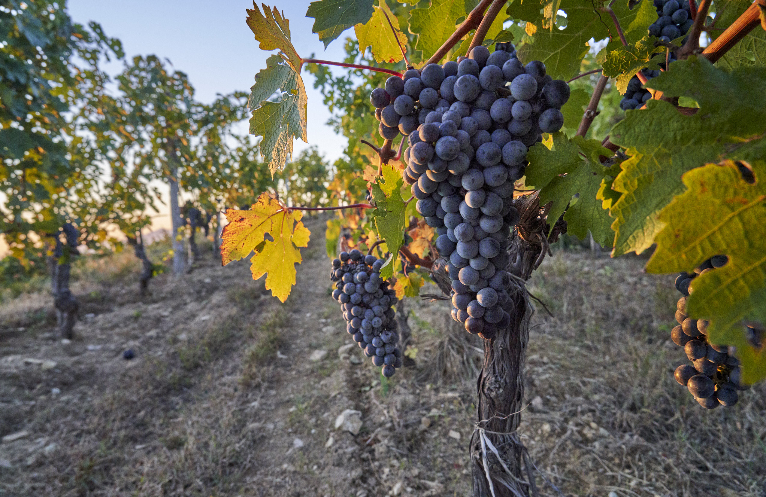 vines_copyright-richard-haughton.jpg