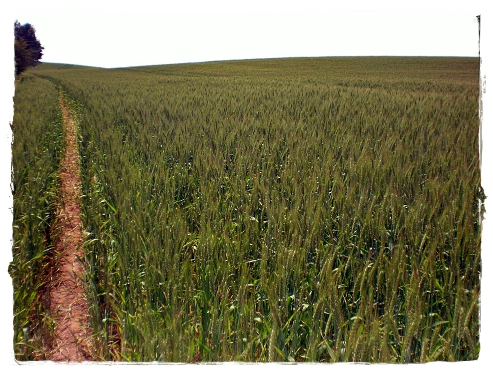 k100-2014-agroesztetika.jpg