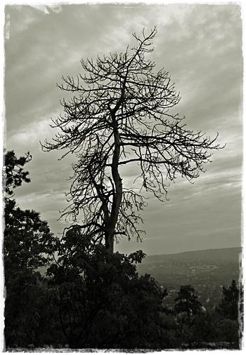 szarazfa.jpg