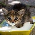 A lusta cica