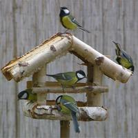 Tavaszváró madárdal