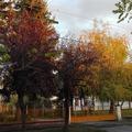Őszi fény