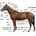 A ló túlsó oldalán