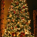 Európa karácsonya 2. - a karácsonyfa, az ajándékozás, a szokások