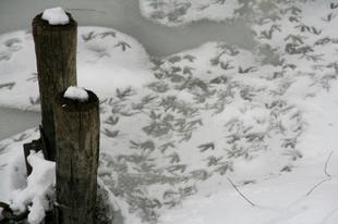 Téli intés. Belgrádi notesz