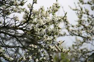 Tavasz április 11-én