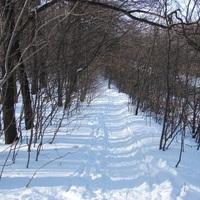 Könnyű téli túra a Budai-hegységben