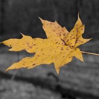 Hűvösvölgy ősszel