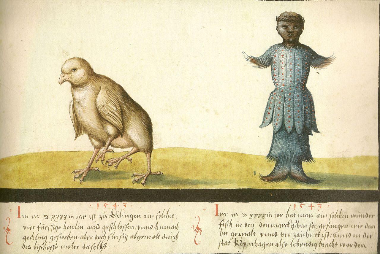 augsburger_wunderzeichenbuch_folio_145-_wundersames_huhn_und_wundersamer_fisch_1543.jpg