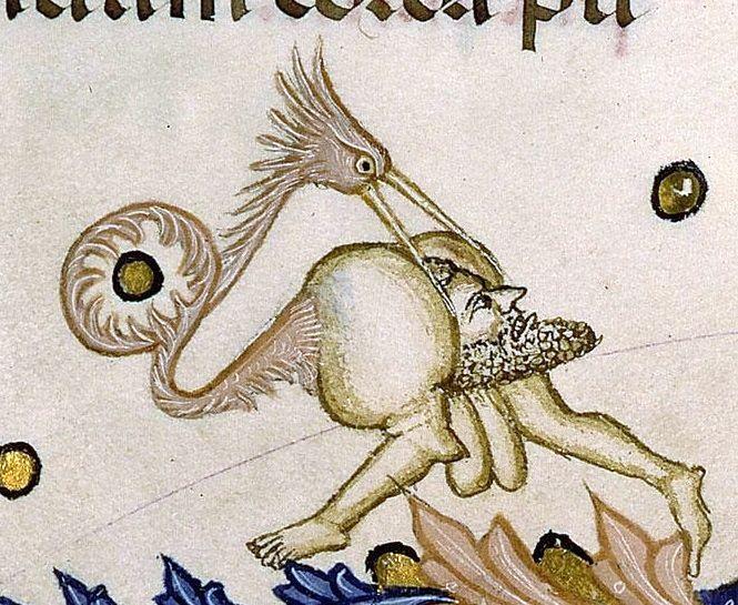 bird-w-headbutt.jpg