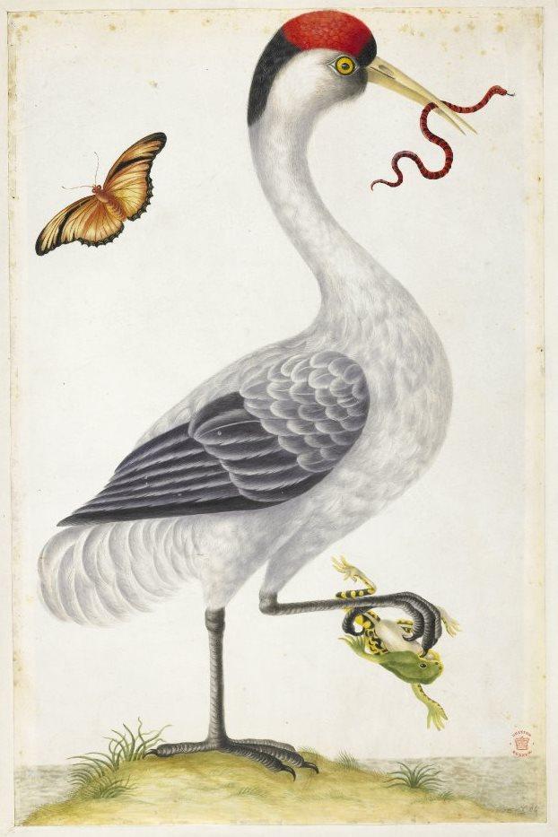 bm-dorothea-02-whitbird.jpg