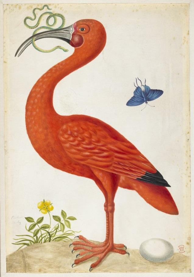 bm-dorothea-03-ibis.jpg