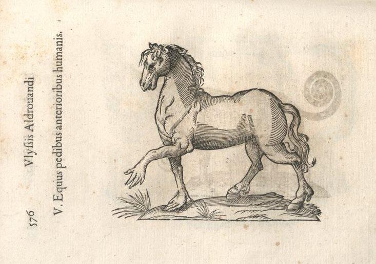 mh-equuspedibusanterioribushumanis_1.jpg
