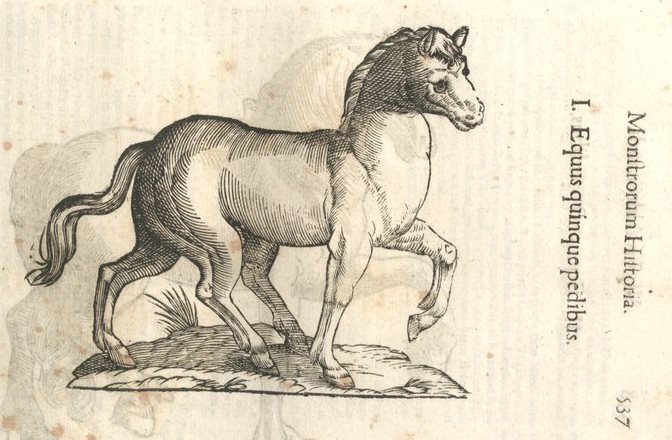 mh-equusquinquepedibus.jpg