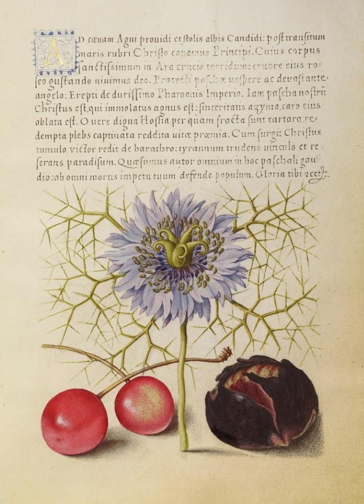 miracaligraphiaemonumenta-folio-003-full.jpg