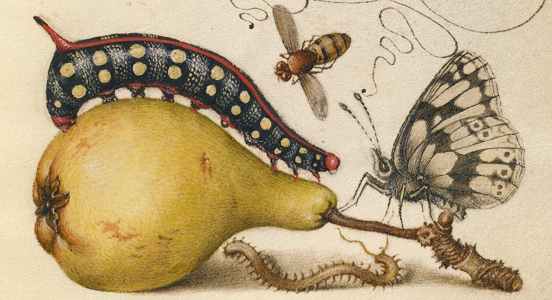 miracaligraphiaemonumenta-folio-007.jpg