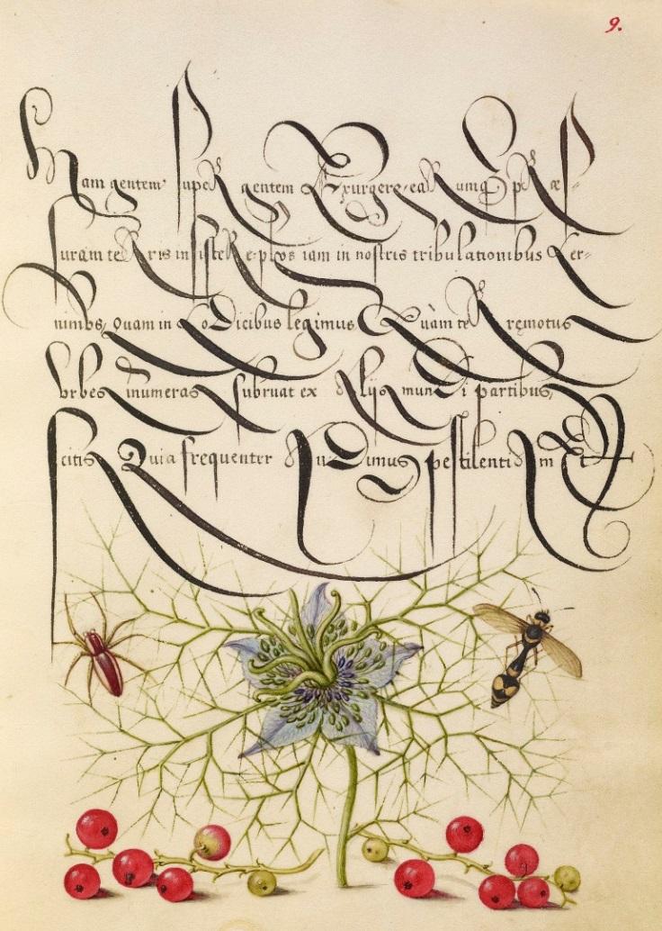 miracaligraphiaemonumenta-folio-009-full.jpg