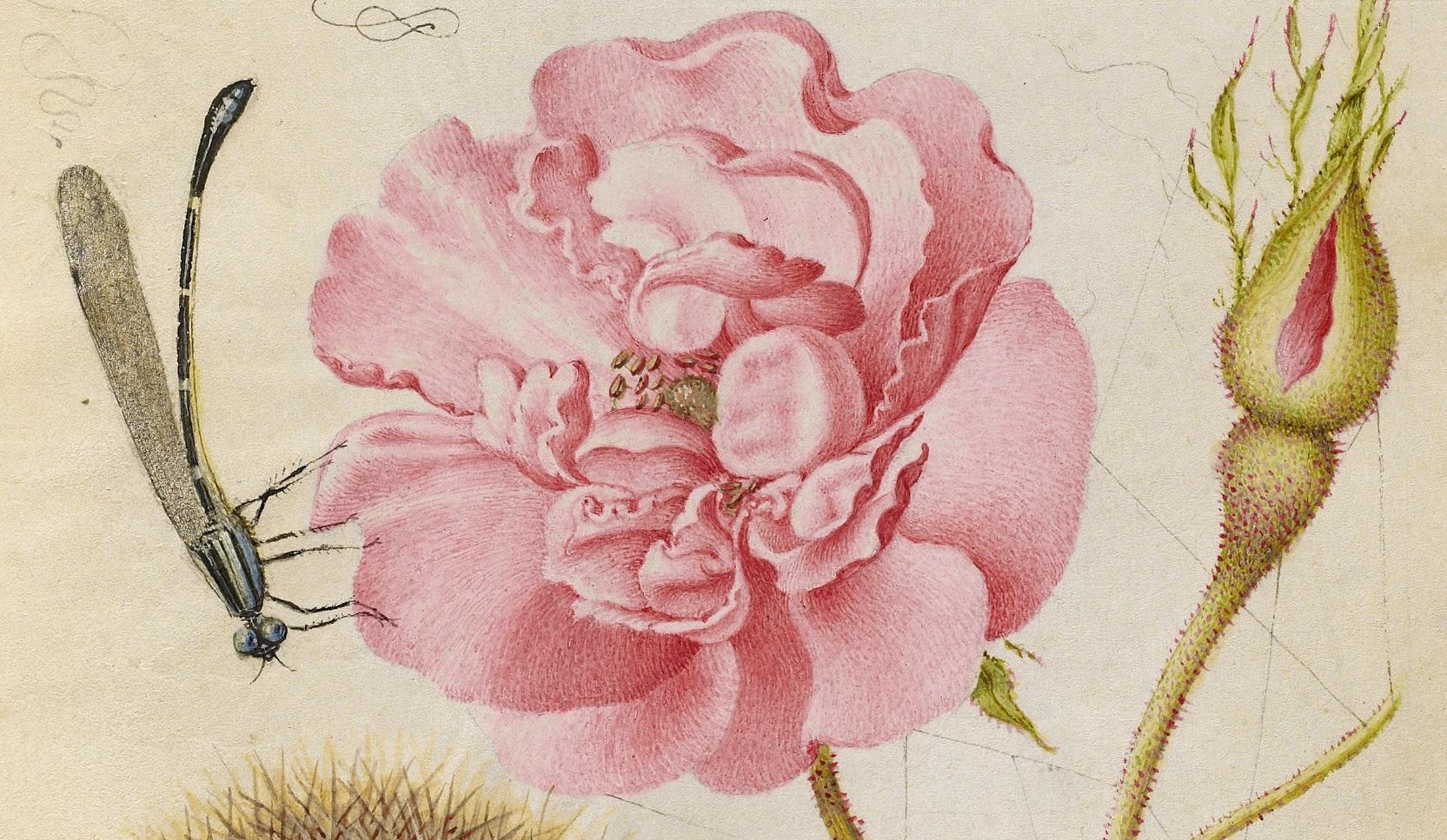 miracaligraphiaemonumenta-folio-010.jpg