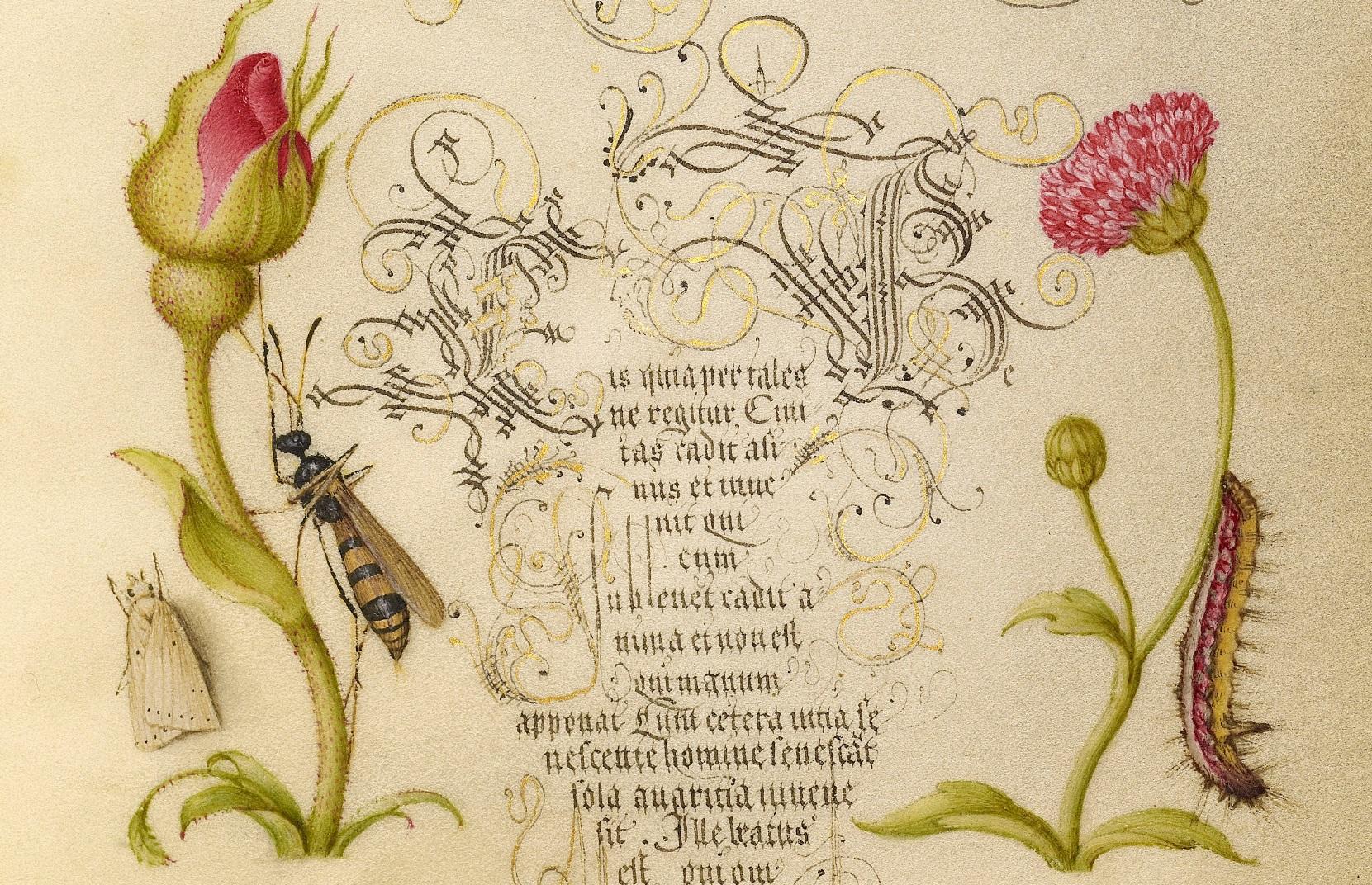 miracaligraphiaemonumenta-folio-011.jpg