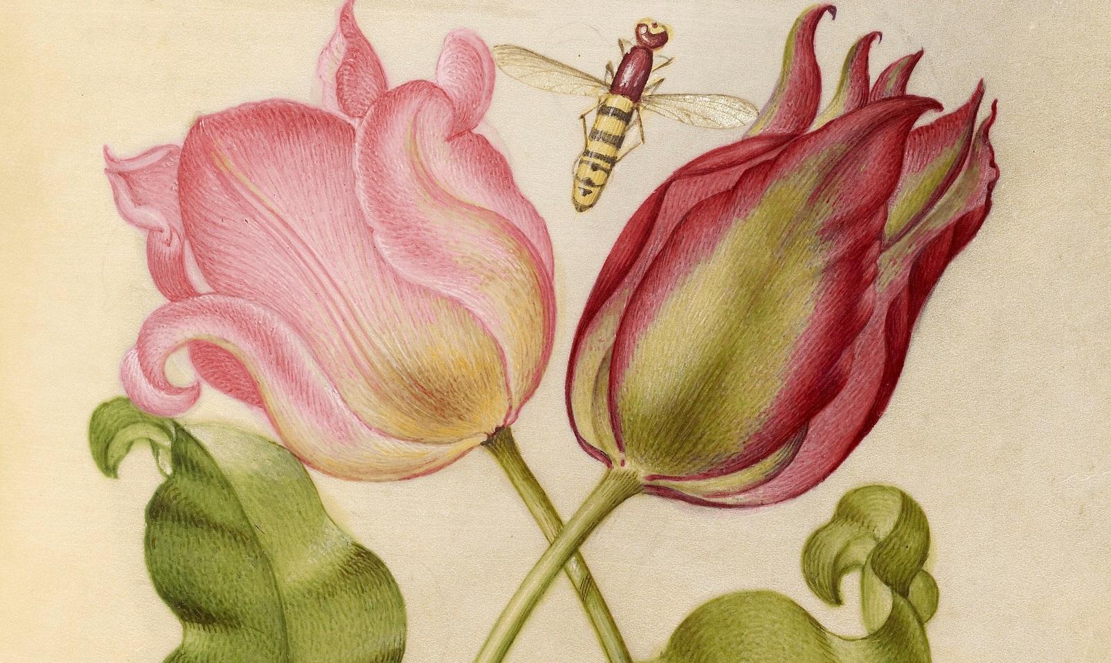 miracaligraphiaemonumenta-folio-060.jpg