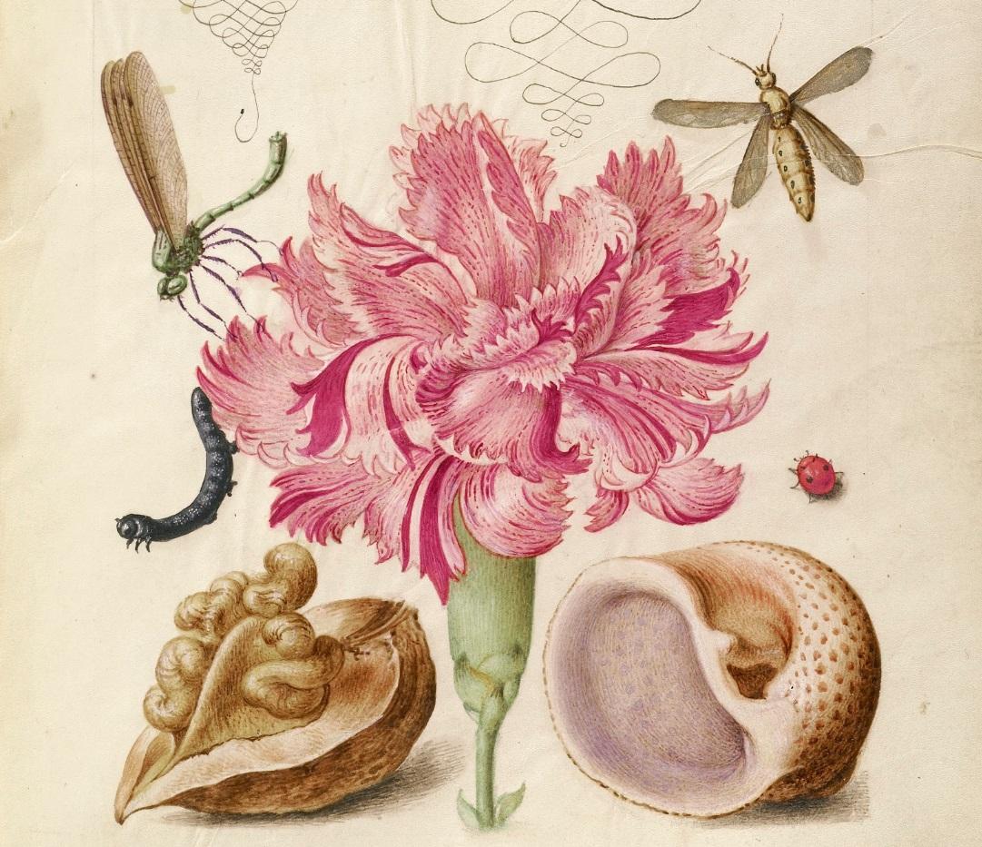 miracaligraphiaemonumenta-folio-074-b.jpg