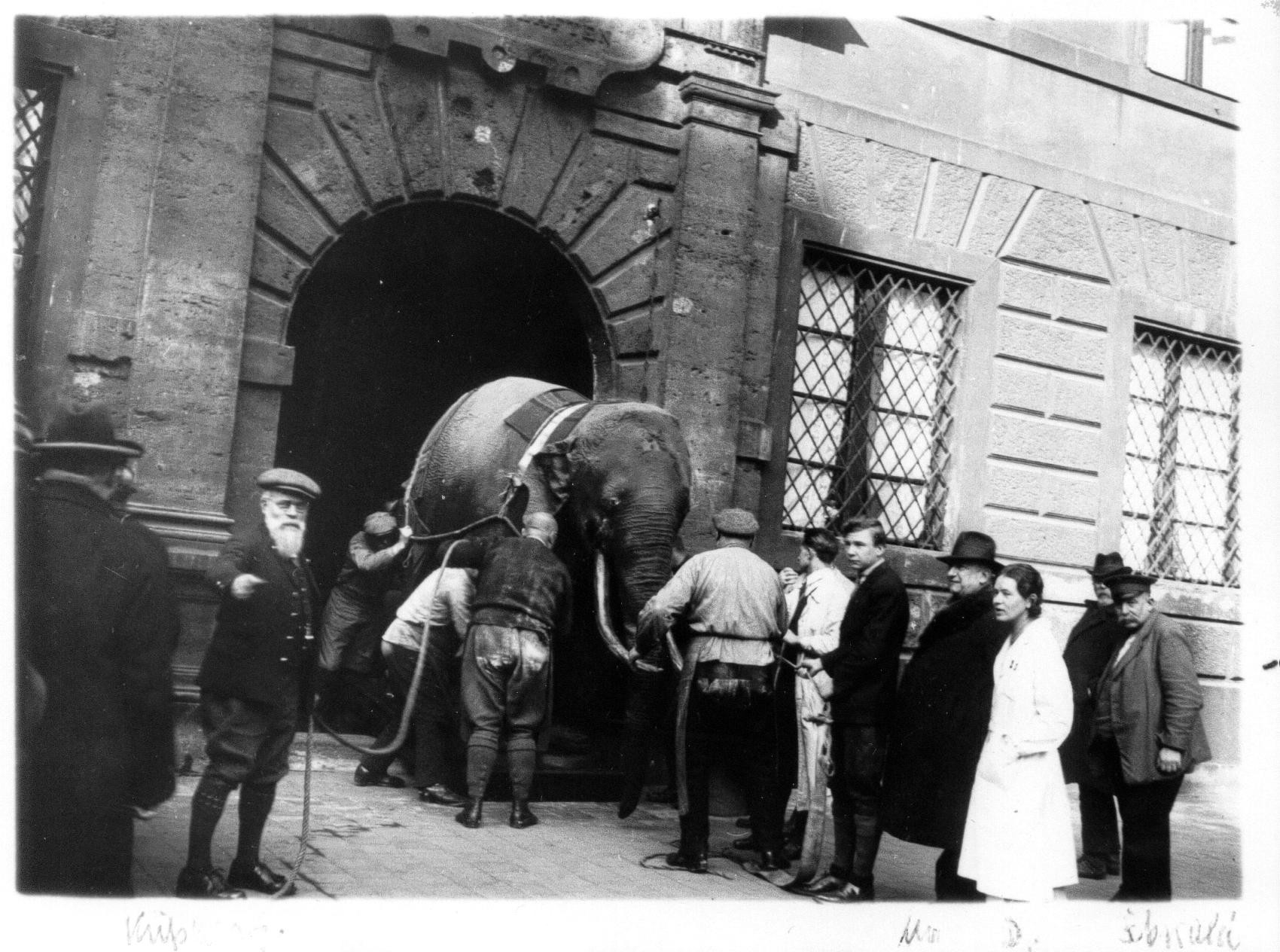 soliman-elephantumzugfoto.jpg