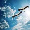 A gólya generáció