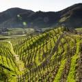 A prosecco szülőhazája: Veneto