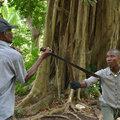 Nyerő stratégia a dzsungelharchoz