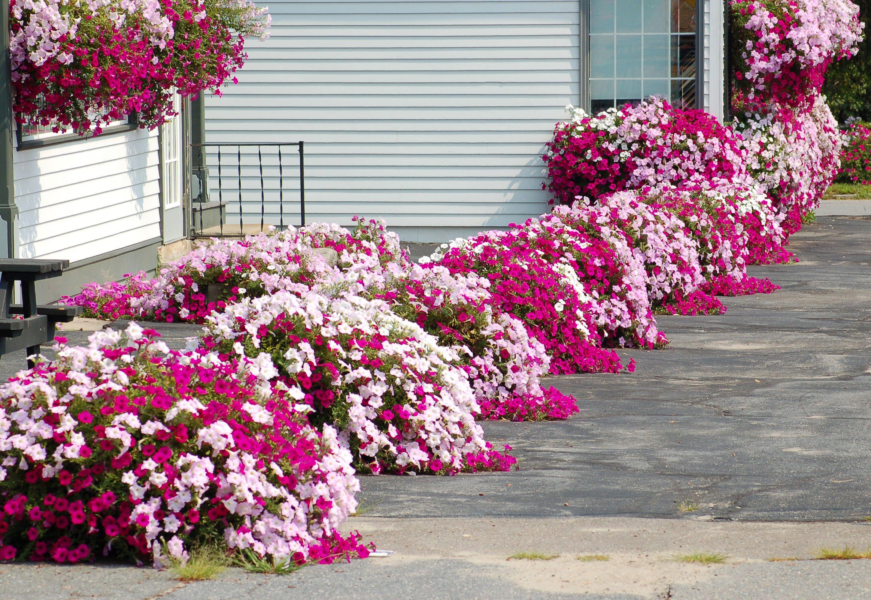flower-garden-design-for-full-sun-bflower-garden-designb-for-front-bb.jpg