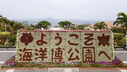 Okinawa - Churaumi