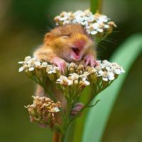 Ne csak a boldogság világnapján legyünk boldogok